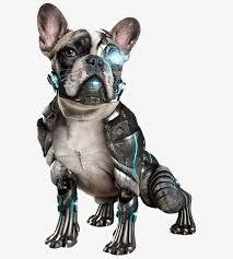 animaux technologie